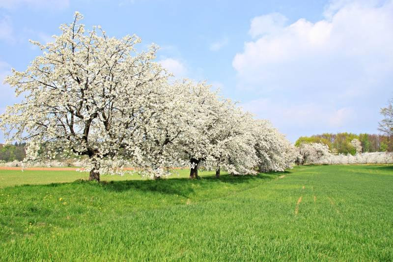 Kakve su perspektive voćarstva u Vojvodini