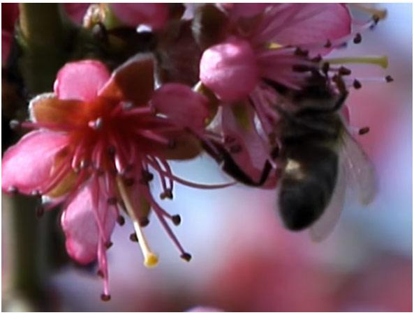 Krema protiv bora na bazi pčelinjeg otrova