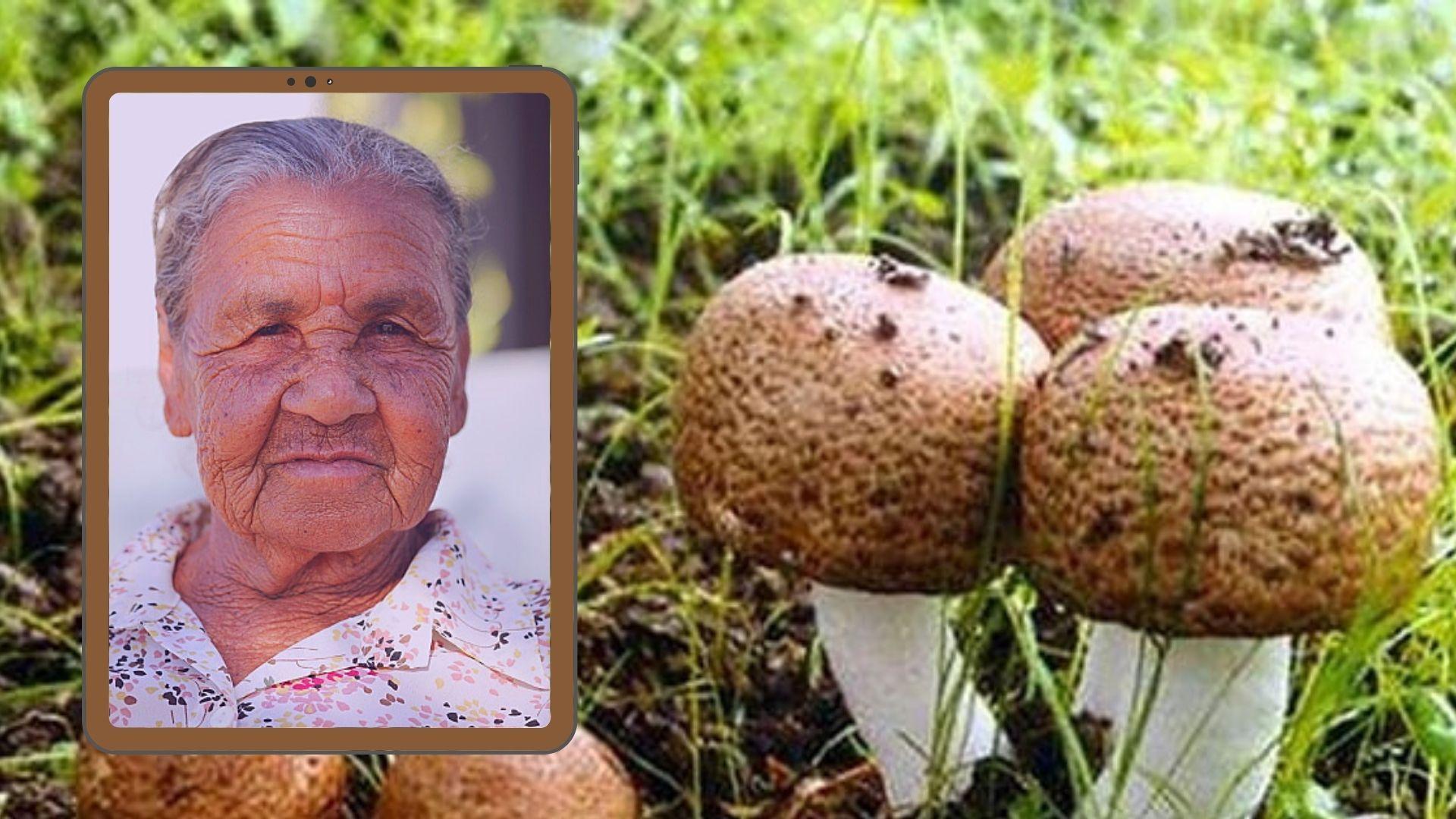 agarikus medicinska gljiva protiv starenja